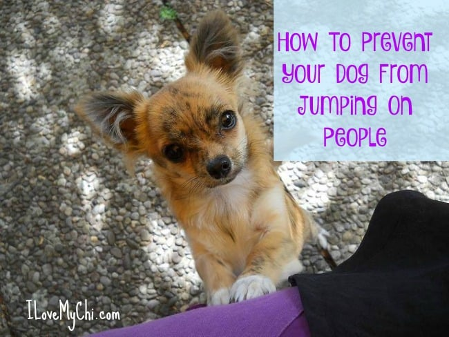 How to Prevent Your Dog from Jumping on People
