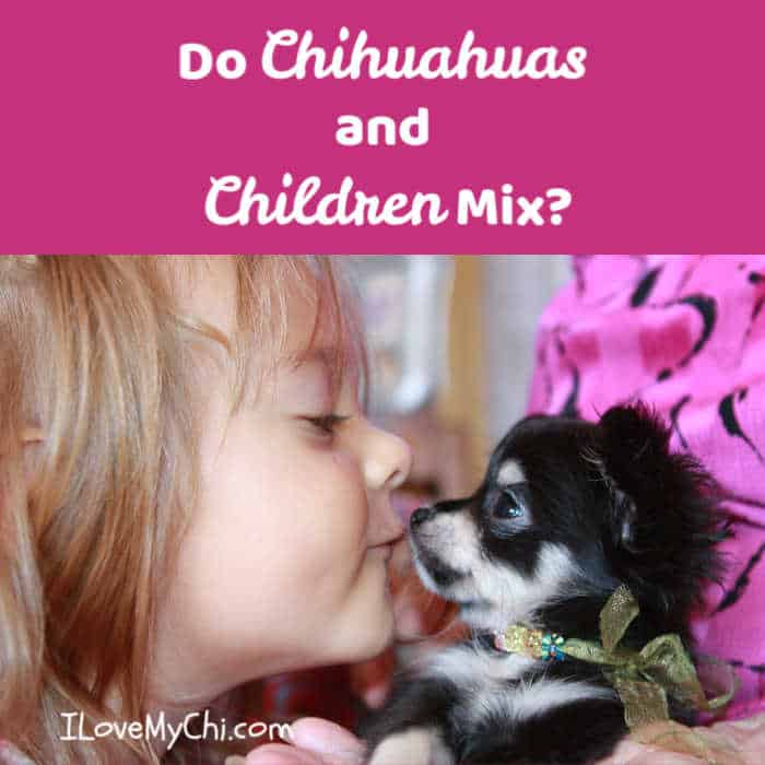 little girl kissing a chihuahua