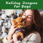 Holiday Dangers for Dogs