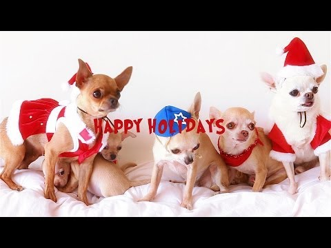 A Merry Chihuahua Christmas to All
