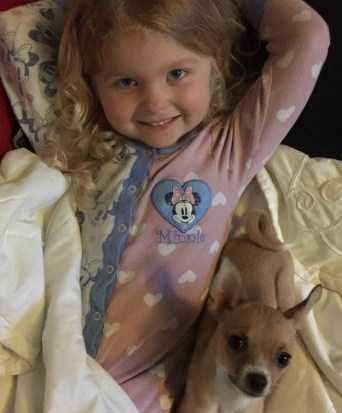 Do Chihuahuas and Children Mix?