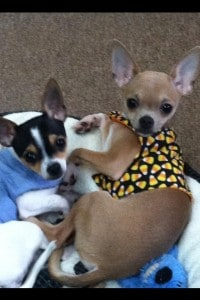 These cuties are Pippi & Buster  and their pet parent is Christy Snyder Cox‎