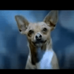 Peter Dies From Chihuahuas
