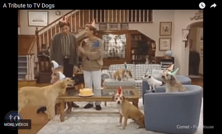 Tribute to TV Dogs