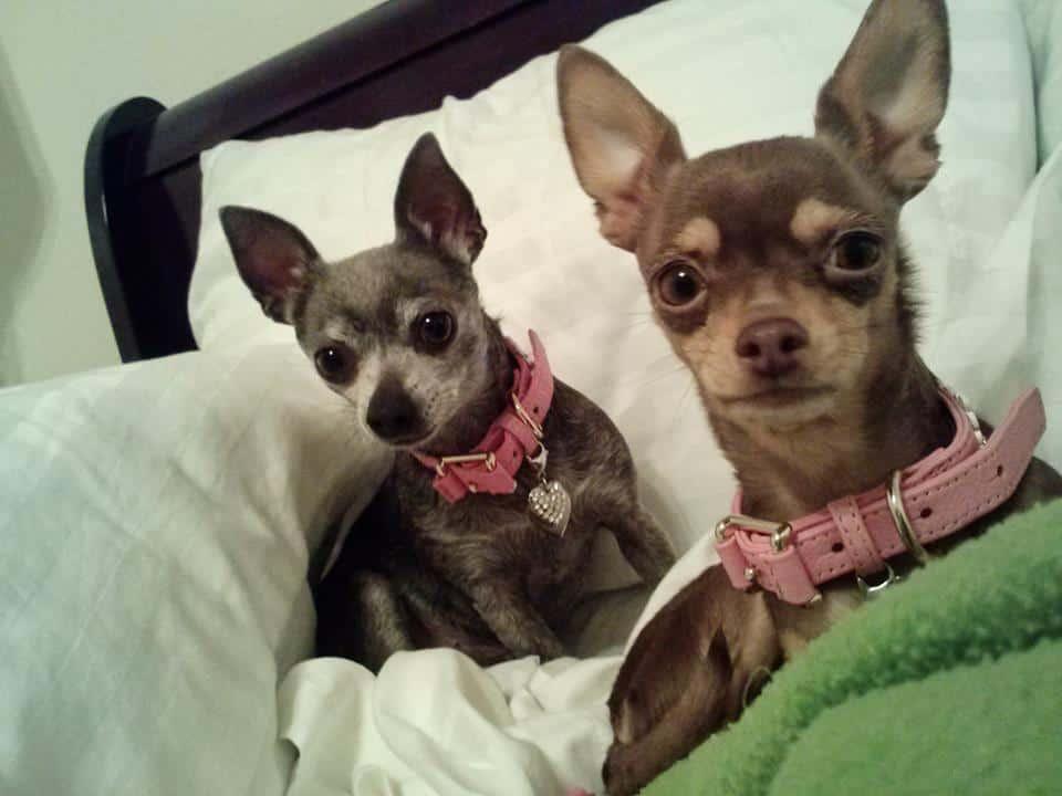 2 beauties!
