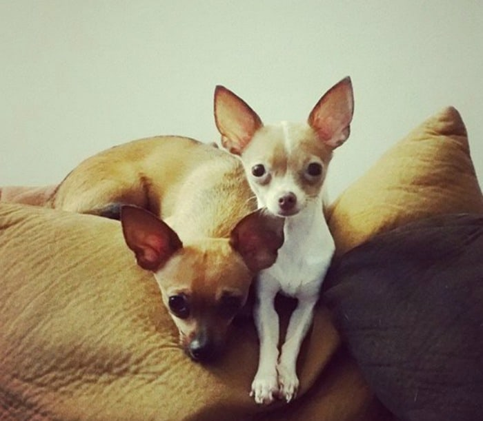 Zhubito & Zhabita pet parent is Jobel Lop