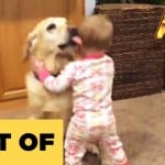 Dogs Love Babies! Not!