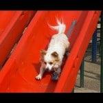 Dogs on Slides