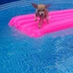 Having Fun Swimming? Or Not