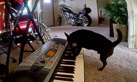Piano Playing Chi