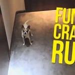 Run Pancho Run
