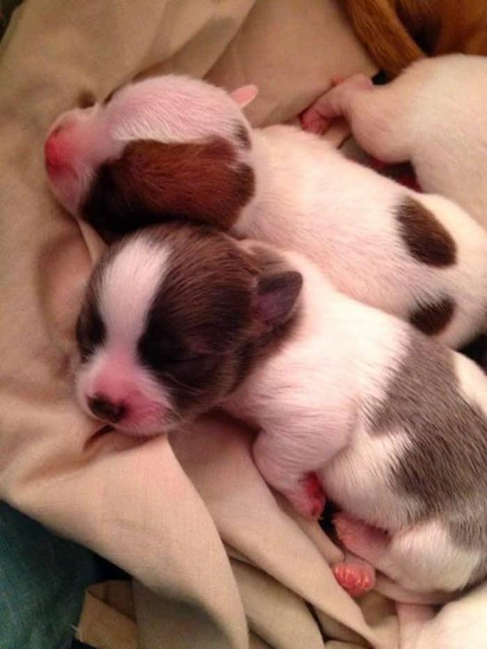 2 sweet pups