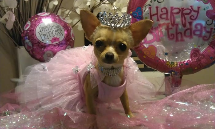 Birthday princess Chi dress