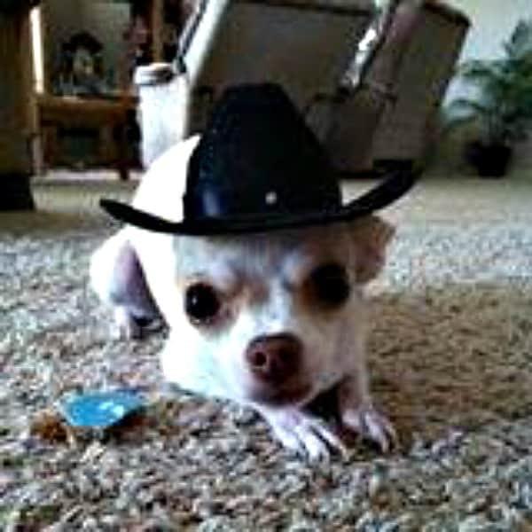 Tinka the Chihuahua