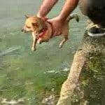 Air Swimming