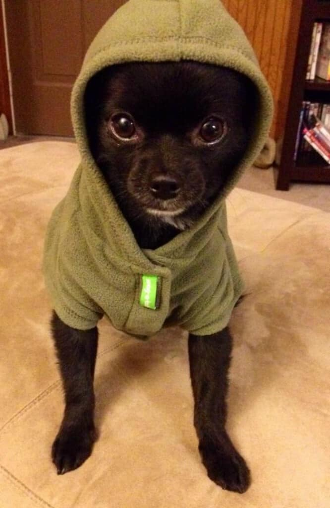 chi in jacket