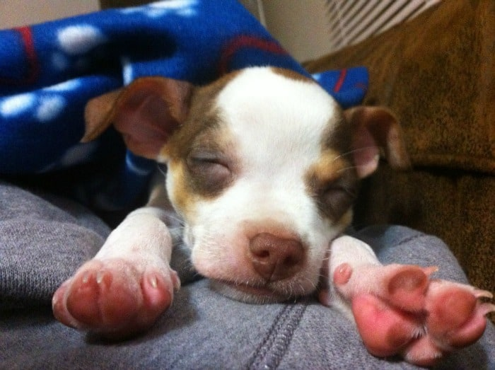 stretching sleepy pup