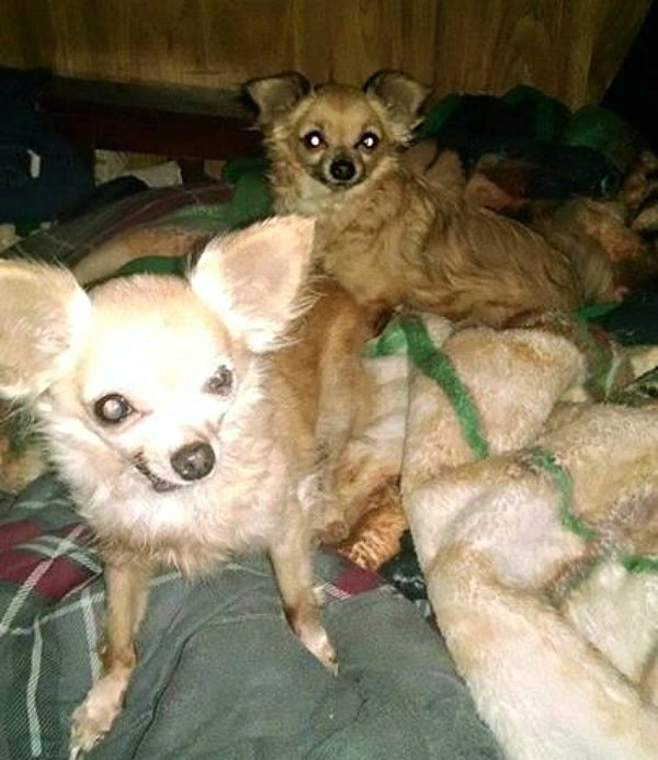 Foxy Lady and Cleo