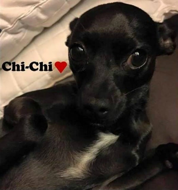Chi-Chi the Chihuahua