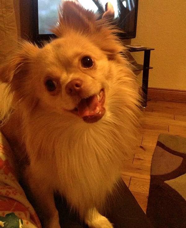 smiling Chi