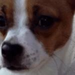 Nella's Chihuahua Story