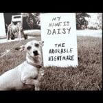 Daisy Gets Shamed
