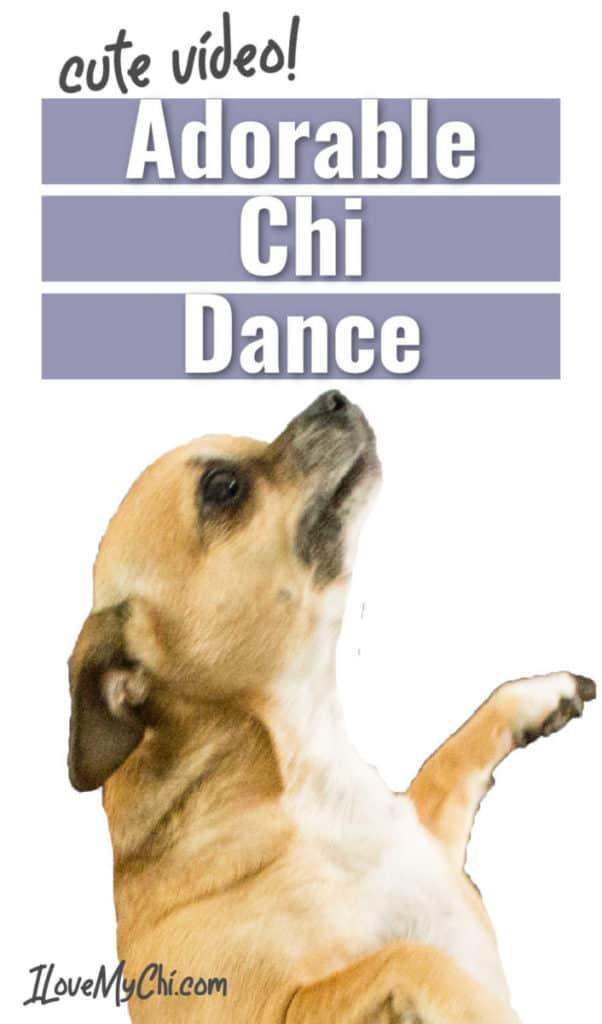 dancing chihuahua