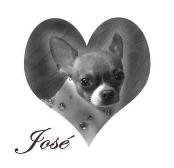 Jose the Chihuahua