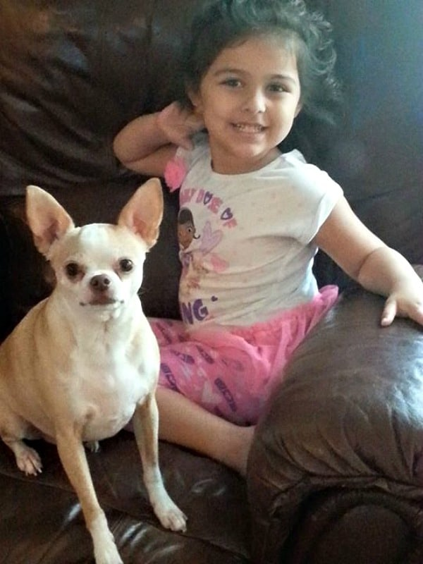 Marley the Chihuahua and Bella
