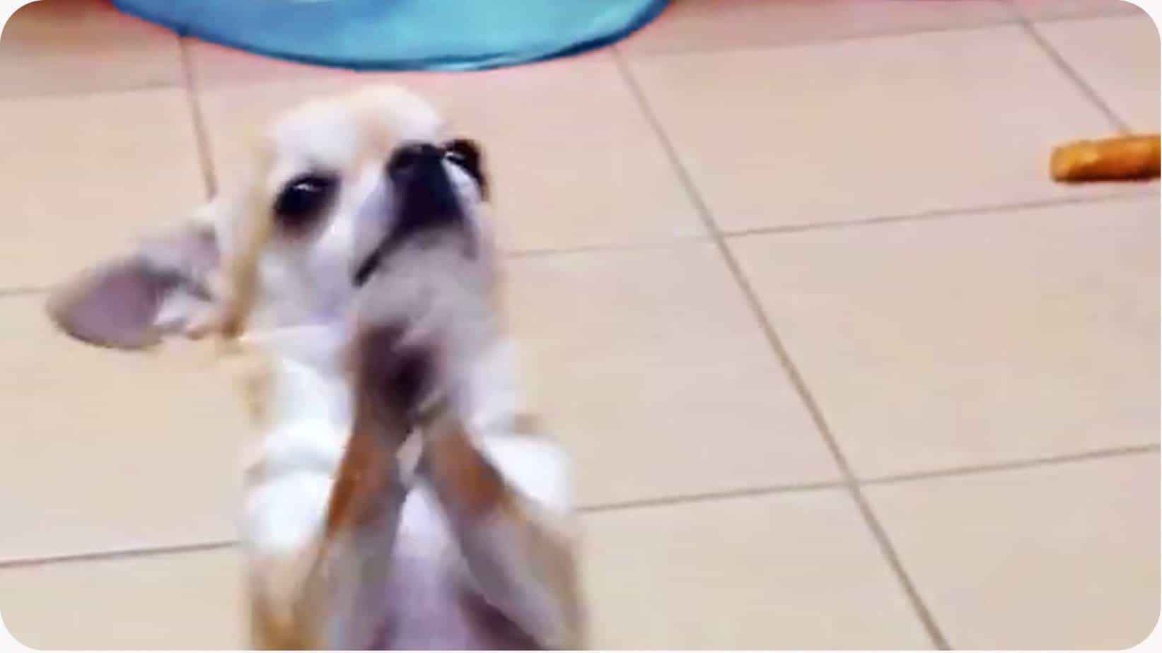 Adorable Chi Dance