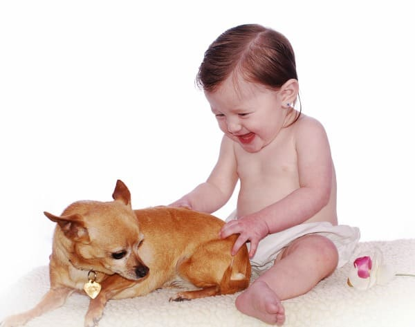 baby and Chihuahua
