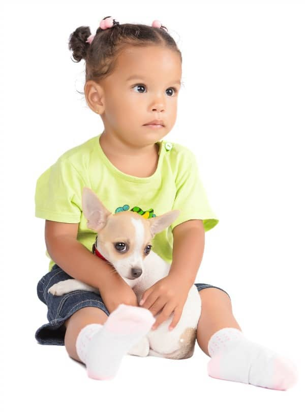 Baby girl with Chihuahua