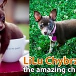 LiLu the Dancing Chi