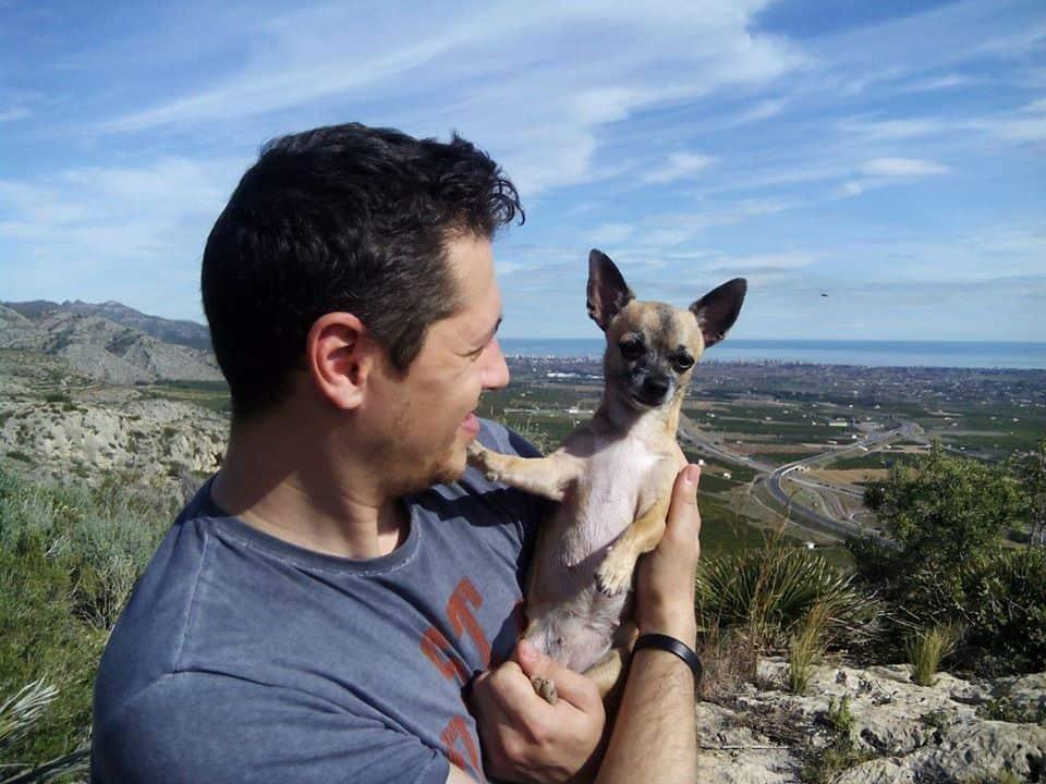 Dalila the Chihuahua
