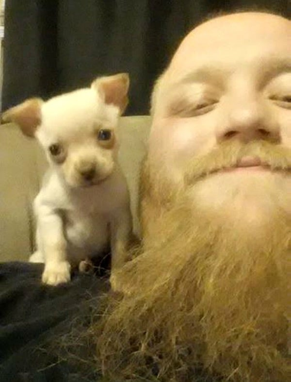 Zero the Chihuahua and his dad