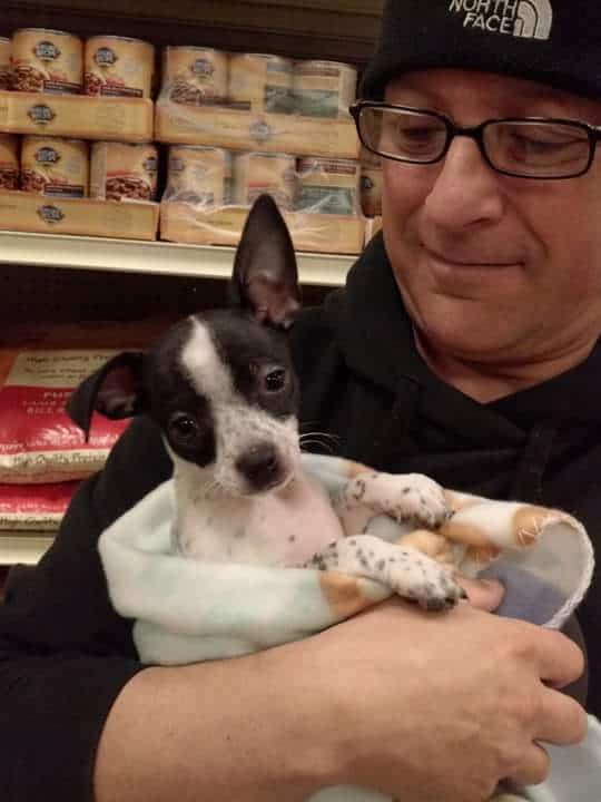 Pepe the Chihuahua and his dad