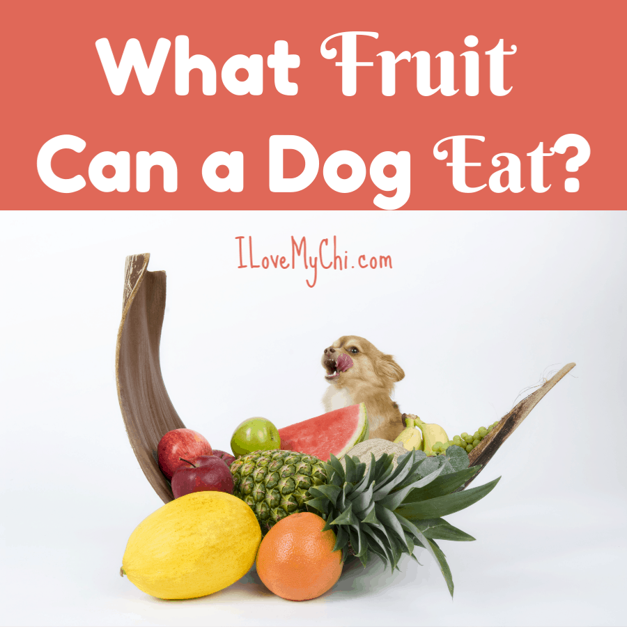 What Fruit Can a Dog Eat?