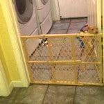 Puppy Escape Artist