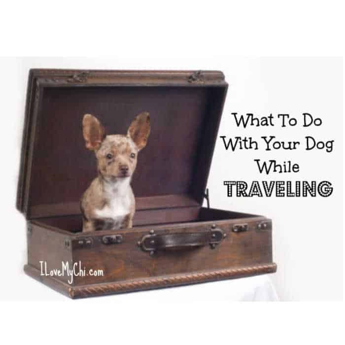 chihuahua dog sitting inside and old fashioned suitcase