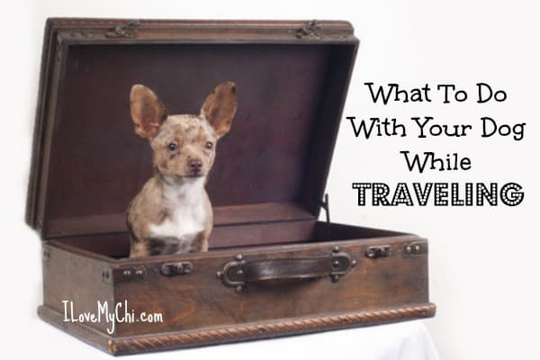 What to do with your Dog while Traveling