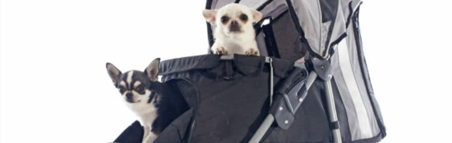 Top 10 Pet Strollers for Your Chihuahua