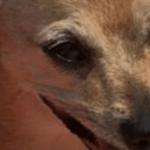 Time to Say Goodbye to 5 Fur Babies