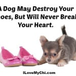 Dog Will Never Break Your Heart