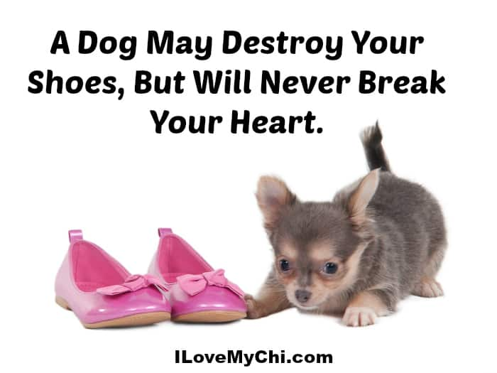 A dog will never break your heart