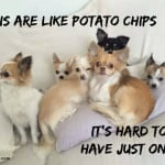 Chis are Like Potato Chips