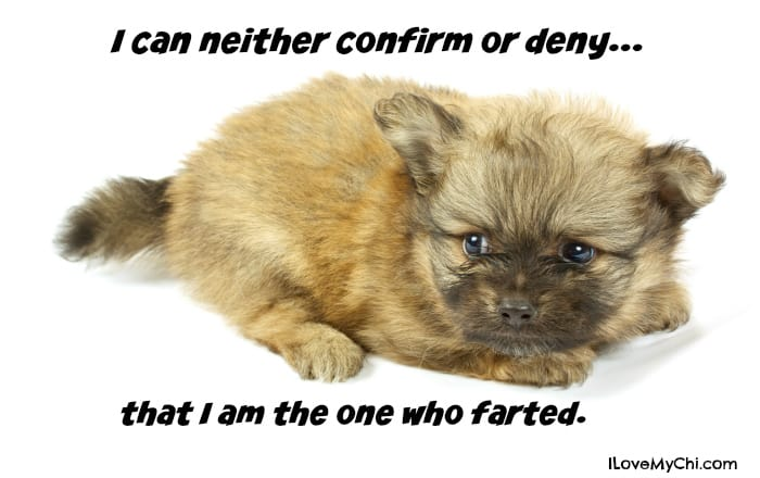 Too Cute to Fart