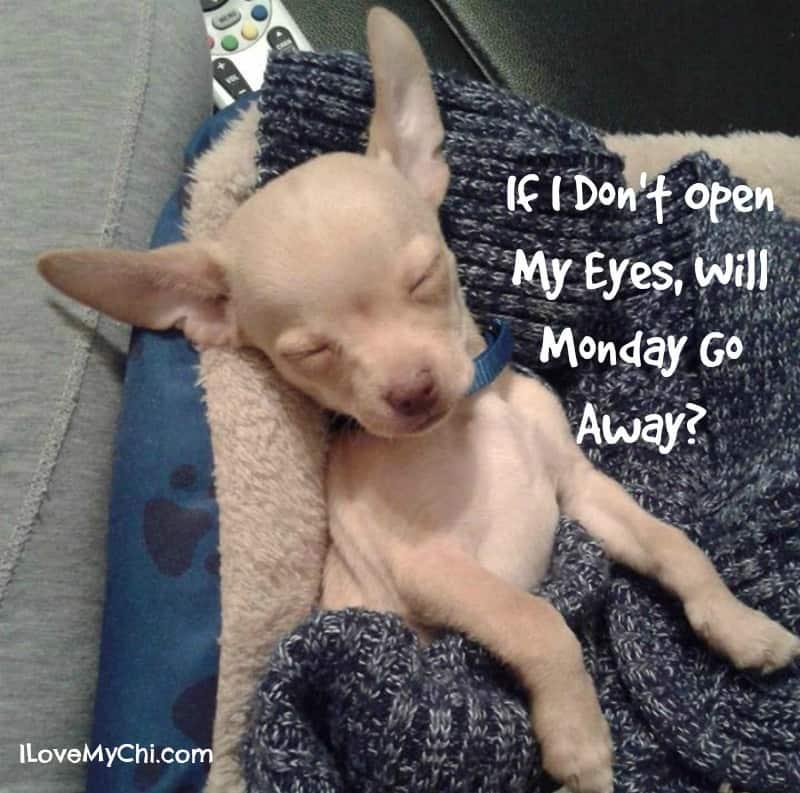 Go Away Monday!