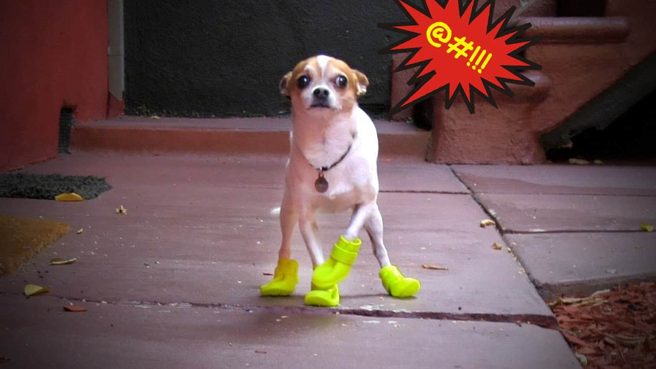 Pancho and His Shoes