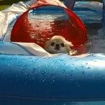 Swimming Chis