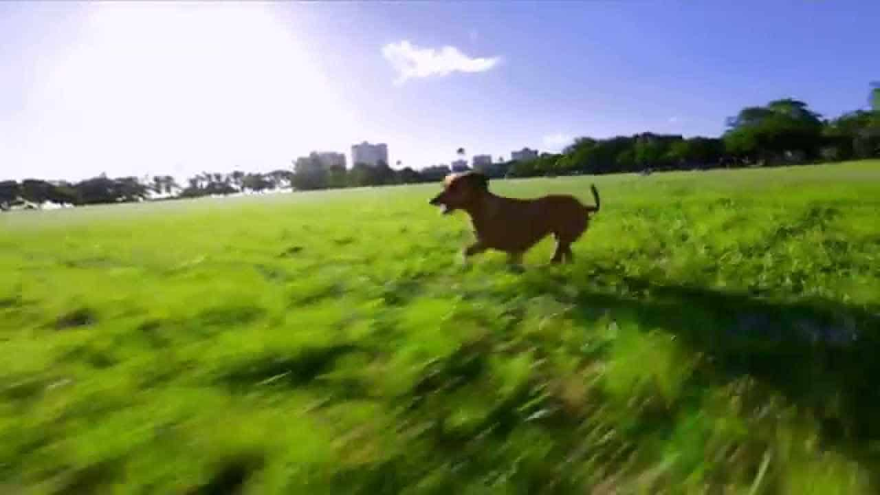 Running Dogs in a Park